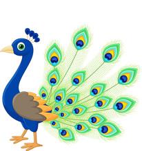 Peacock Cartoon