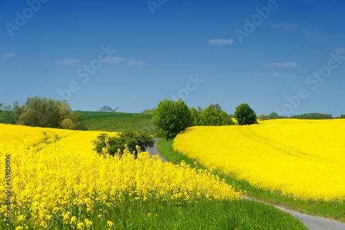 Staande foto Geel Landschaft in Vorpommern