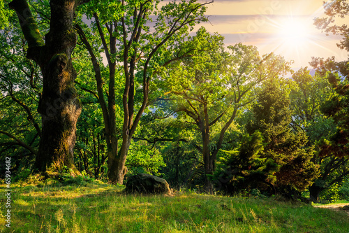 Fototapeten Wald forest glade in shade of the trees at sunset