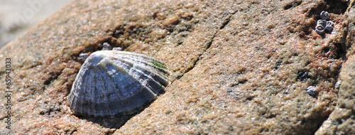 Fotografie, Obraz Bernique collée sur un rocher à marée basse