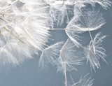 Dandelion clock: wishes and dreams    :)