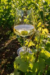 Obraz na Szkle Do winiarni verre de vin dans les vignes