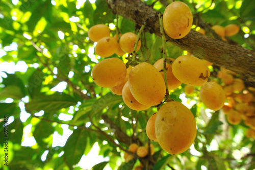 Photo Fruits in Asia
