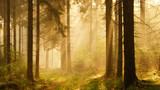 Wald im Regen mit Sonnenstrahlen