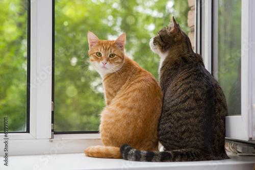 Keuken foto achterwand Kat Two cat sitting on the window sill