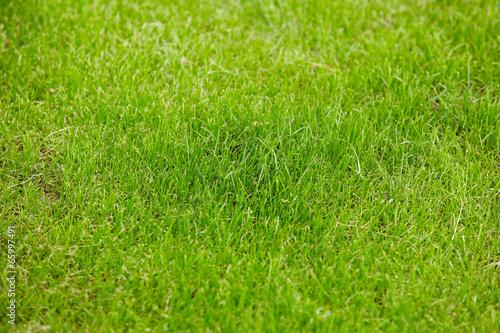 Fotobehang Cultuur grass backgroun