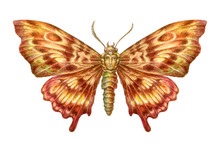 Fairy-tale Butterfly With Face Inclusion Painting. Isolated On W