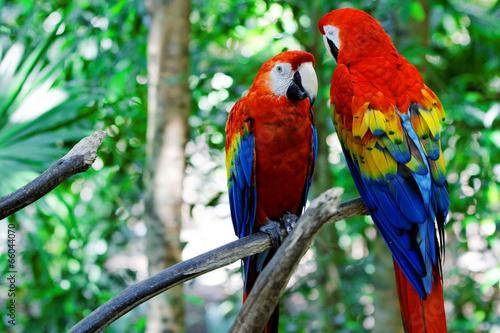 Naklejki papugi  papagei
