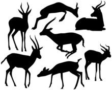 Gazelle Set