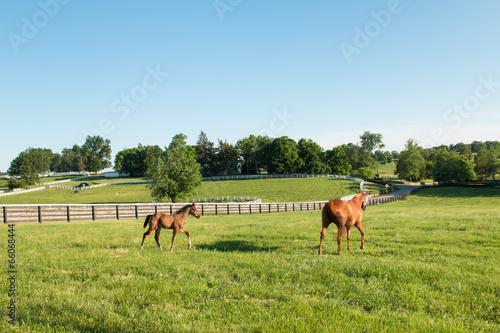 Photo  Horses at horse farm. Country landscape.