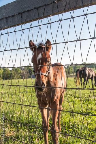 Fotografie, Obraz  Foal portrait