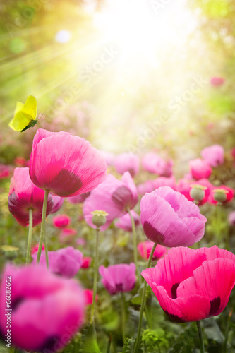 abstract summer Floral background