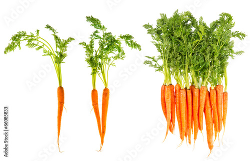 Obraz fresh carrots with green leaves isolated on white - fototapety do salonu