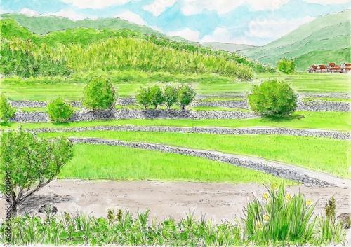 In de dag Lime groen 田舎の風景