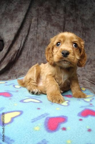 귀여운 애완동물 © wizdata