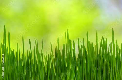 Fröhliche Frühlingsmomente - Gras