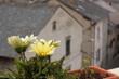 village de montagne (Roquefort-de-sault) aude