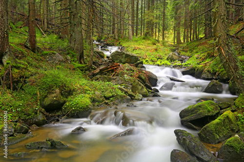 Fototapety, obrazy: mountain river in green Carpathian forest