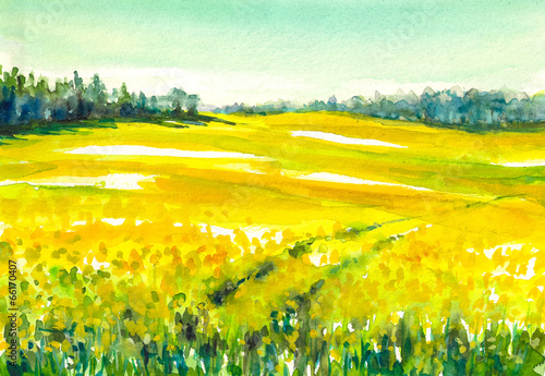 Poster Jaune Rapeseed field.Watercolors