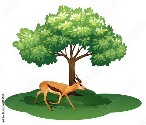 Photo A deer under the tree