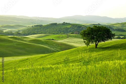 La pose en embrasure Pistache Countryside, San Quirico d`Orcia , Tuscany, Italy