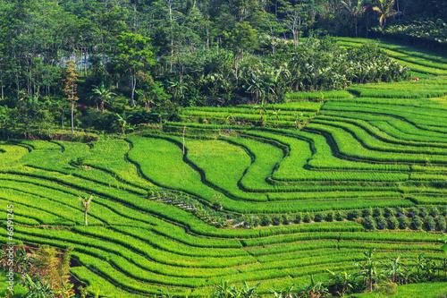 Foto auf AluDibond Reisfelder Rice terrace