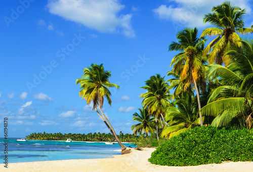Paradise beach with palm trees on white sand