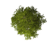 Tree From Above Isolated On Wh...