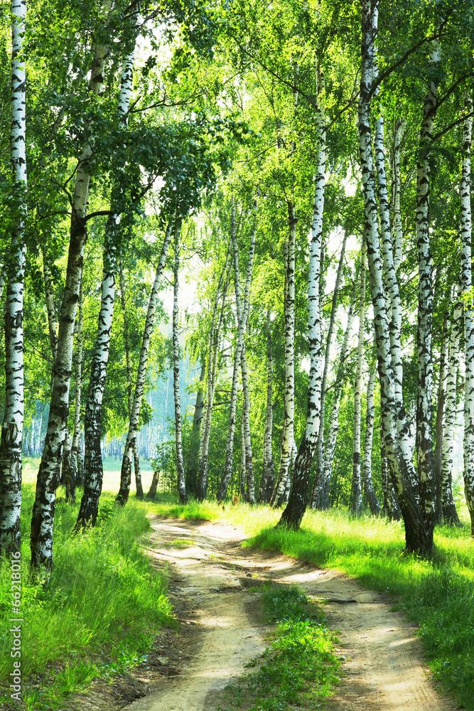 Fototapety, obrazy: Droga przez las brzozowy
