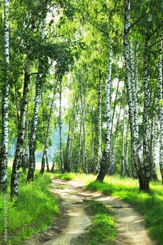 Aluminium Prints Bestsellers forest birch