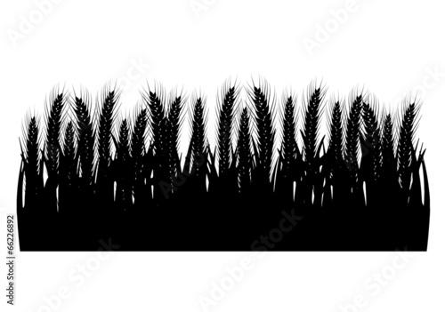 silhouette of ripe wheat ears Wallpaper Mural