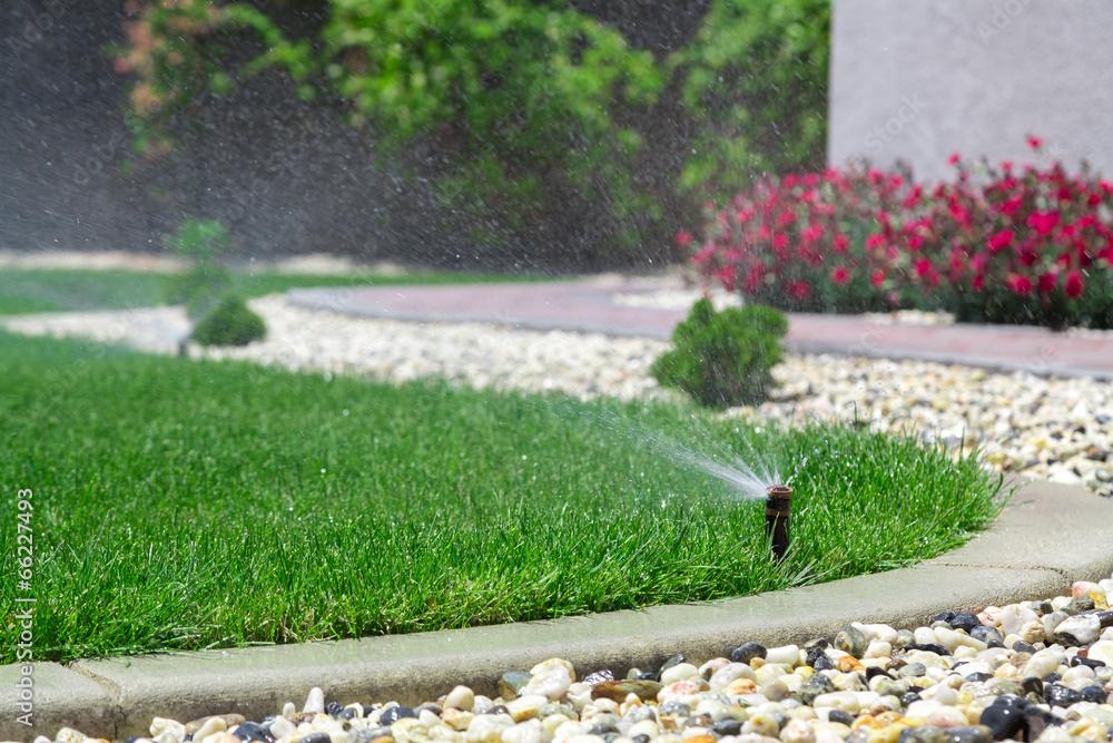 Fototapety, obrazy: Sprinkler watering grass