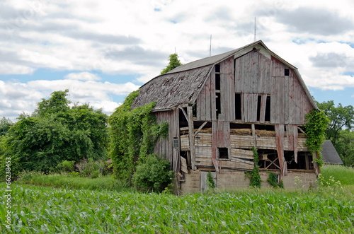 Fotografie, Obraz  dilapidated old barn in  a cornfield