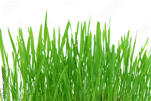 Beautiful spring grass on white background