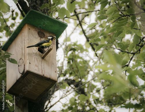 Carta da parati Birdhouse with bird