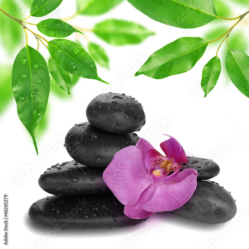 purpurowy-kwiat-orchidei-koniec-bambusa