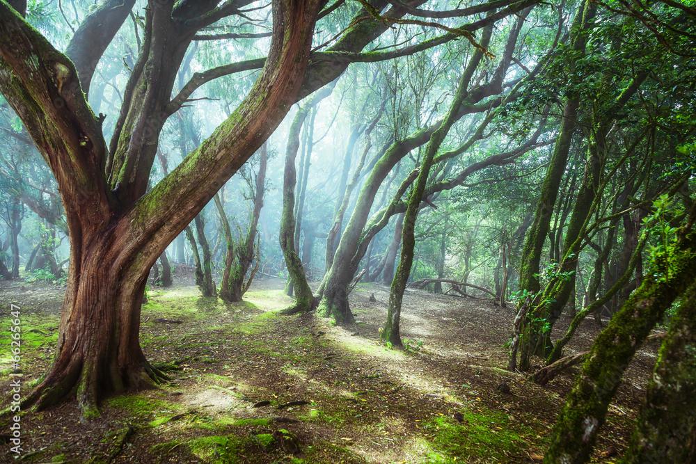 Fototapety, obrazy: Tajemniczy las