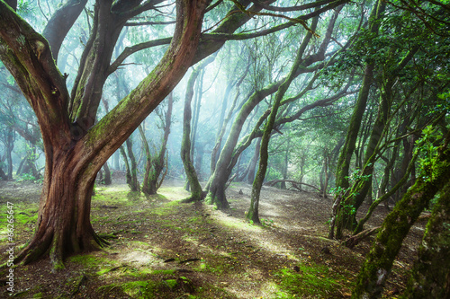 Fototapeta unusual forest obraz