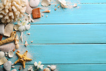 Seashells On Wood