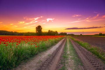 Naklejka Poppies field at sunset