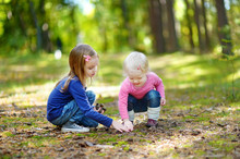 Two Little Sisters Gathering Pine Cones