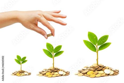 Fotografía  hand giving a golden coin to a tree growing on coins