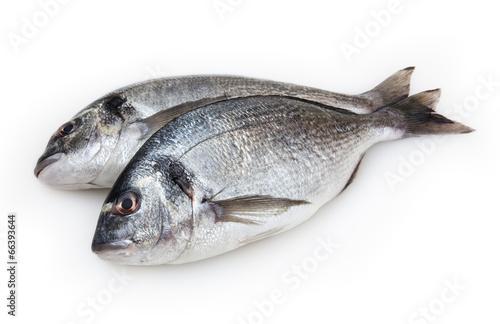 Acrylic Prints Fish Dorado fish isolated on white background