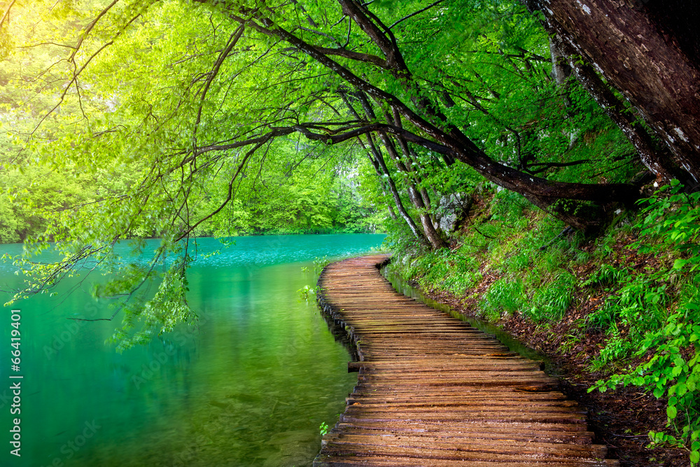 Fototapeta Crystal clear water and wooden path . Plitvice lakes, Croatia