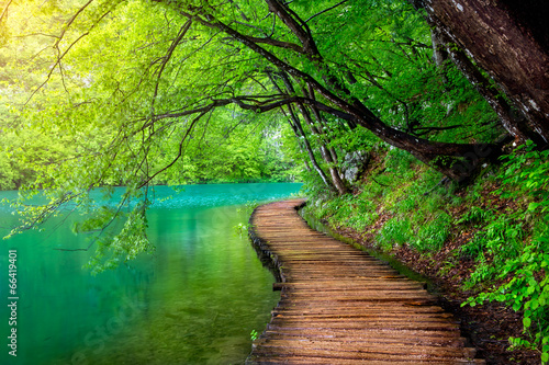 Crystal clear water and wooden path . Plitvice lakes, Croatia - fototapety na wymiar