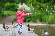 Adorable Little Girl Feeding Ducks At Summer