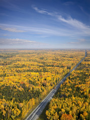 highway in the autumn forest, top view