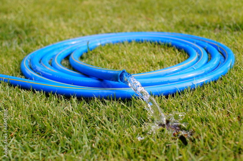Fotografie, Obraz  Garden Blue hose  on green grass.