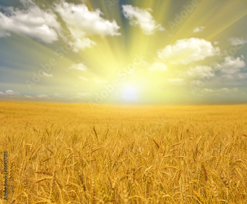 Papiers peints Sauvage gold wheat field under clouds