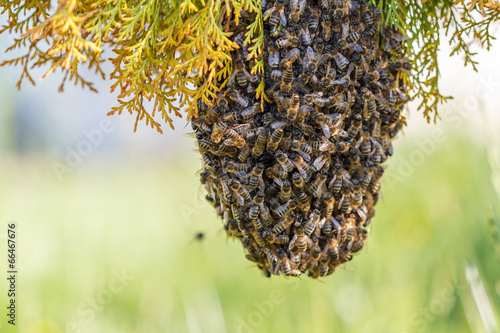Recess Fitting Bee swarm of bees